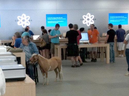 horse_applestore.jpg